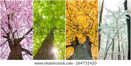 four seasons in the treetops Royalty-Free Stock Photo #264731420