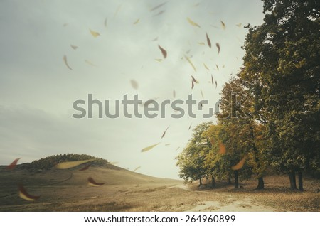edge of forest with leaves blown by wind #264960899