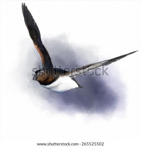 Digital watercolor of a razorbill #265525502