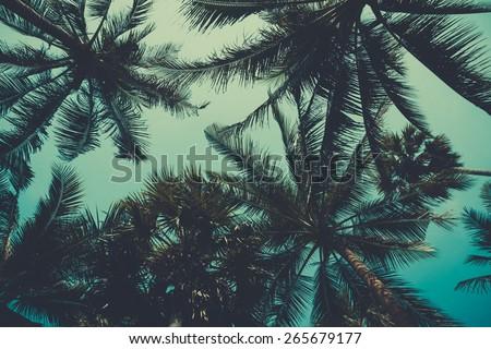 Vintage stylized palm trees over sky background