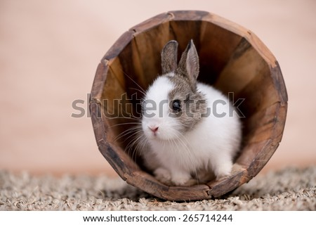 A little bunny in a wooden pot looking to the left #265714244