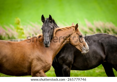 Two horses embracing in friendship. #265779746
