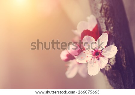 Dreamy photo of spring flowers, detail