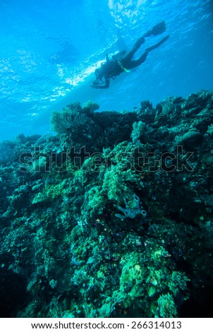 deep blue sea scuba diving diver kapoposang indonesia #266314013
