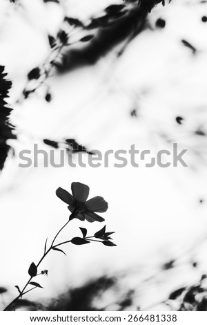 Lonely flower. Autumn meadow. Natural background. Blur
