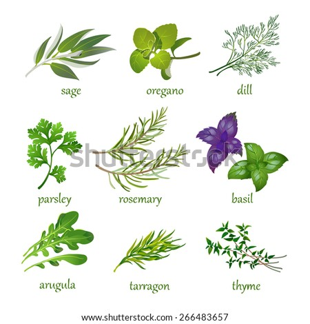 set of vector herbs.  Isolated on white. #266483657