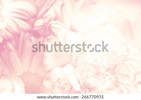 flower on soft pastel color in blur style #266770931