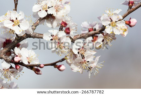 beautiful flowers on a tree in spring #266787782