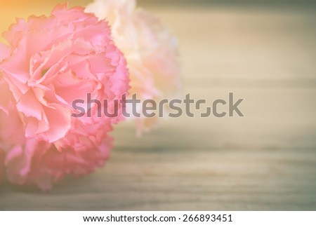 pink and white carnations on wooden background with morning light.