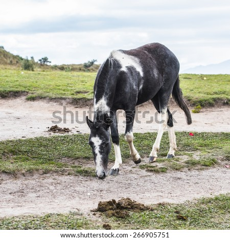 Black and white horse walks on the ground #266905751