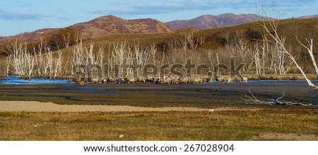Herd on pasture #267028904