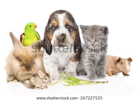 Big group of cute pets. Isolated on white background #267227525
