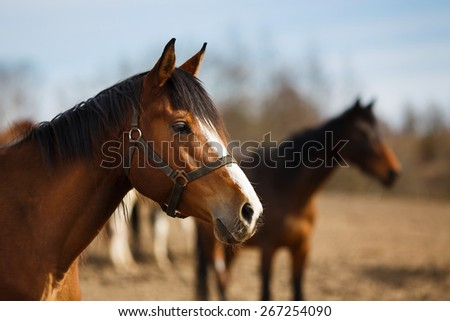 Wild horses on the meadow at spring time #267254090