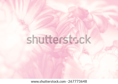 flower on soft pastel color in blur style #267773648