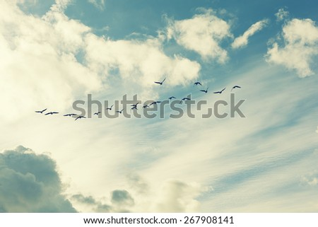 birds flying and abstract sky ,spring background abstract happy background,imaginary landscape
