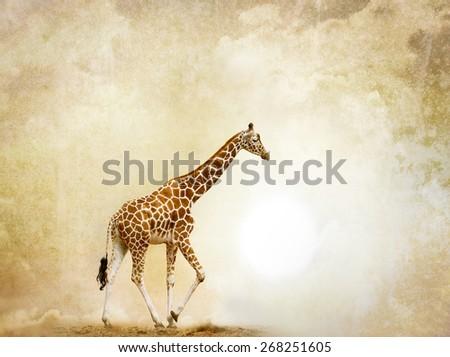 Concept: Alone giraffe in desert, with grunge background behind it