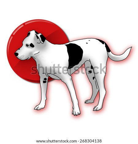 Smart black and white dog on red point. Man's best friend. #268304138