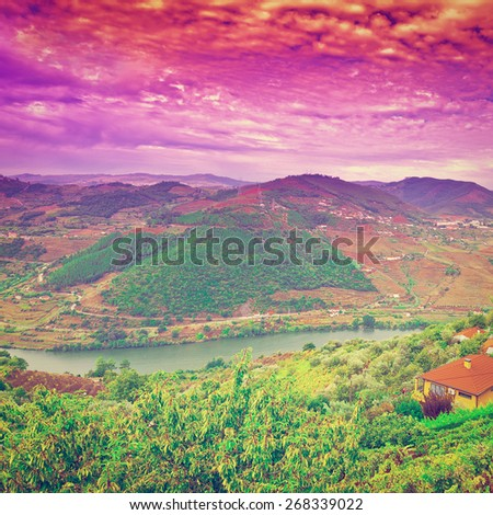 Vineyards in the Valley of the River Douro, Portugal, Instagram Effect #268339022