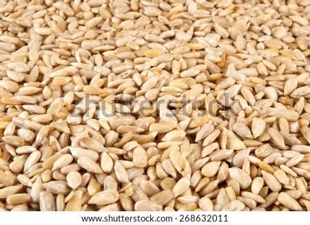 Sunflower seeds background #268632011