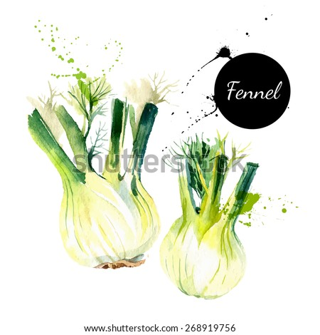 Kitchen herbs and spices banner. Vector illustration. Watercolor fennel Royalty-Free Stock Photo #268919756