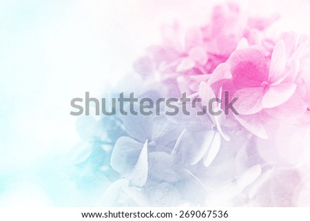 sweet color flowers in soft color and blur style on mulberry paper texture    #269067536