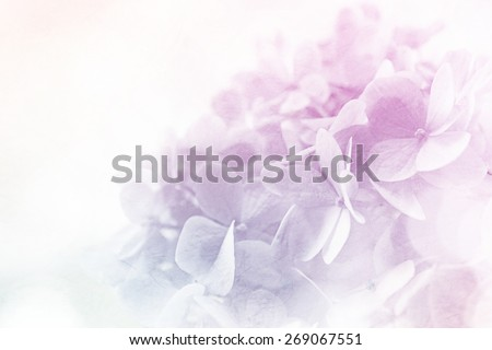 sweet color flowers in soft color and blur style on mulberry paper texture    #269067551