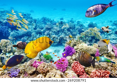 Wonderful and beautiful underwater world with corals and tropical fish. Royalty-Free Stock Photo #269208791