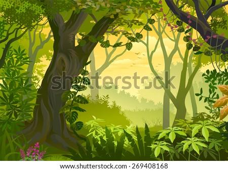 Warm climatic Jungle Illustration