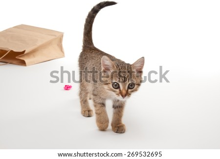 Beautiful kitten playing with paper isolated on white #269532695