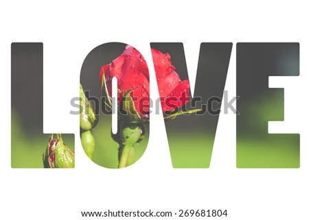 Word LOVE over red rose. #269681804