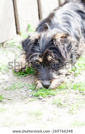 Cute small dog portrait #269766248