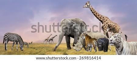 Savanna  wild animals collage #269816414