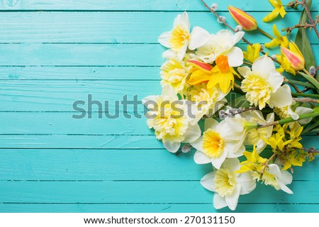 Fresh  spring yellow narcissus, tulips  flowers  on green painted wooden planks. Selective focus. Place for text.