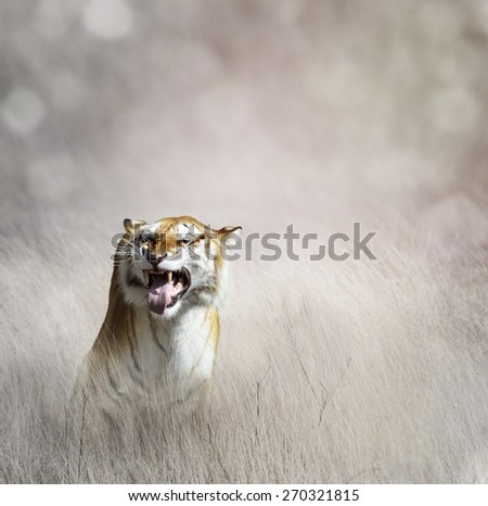 Tiger  In The Tall Grass #270321815