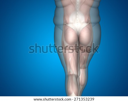 Concept or conceptual 3D fat overweight vs slim fit diet with muscles young man blue gradient background, metaphor weight loss, body, fitness, fatness, obesity, health, healthy, male, dieting, shape #271353239