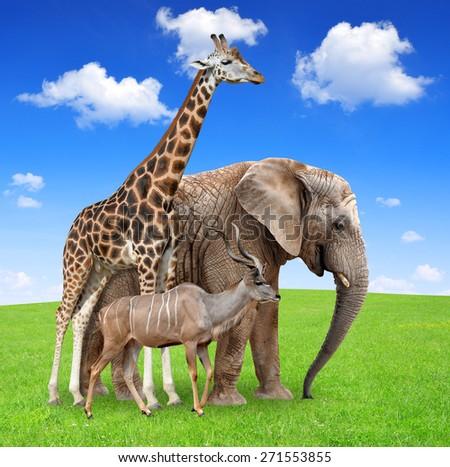 Giraffe with elephant and kudu #271553855