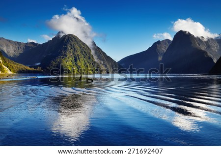 Fiord Milford Sound, South Island, New Zealand #271692407