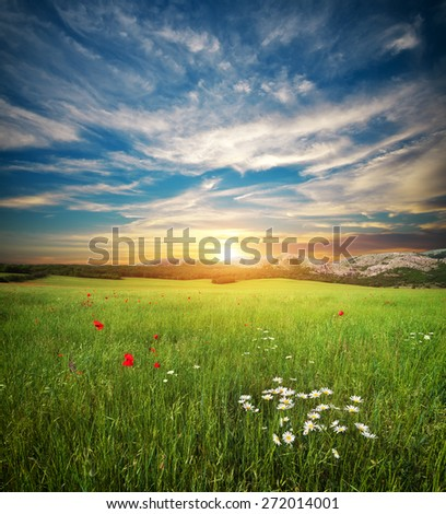 Green spring meadow. Nature landscape composition. #272014001