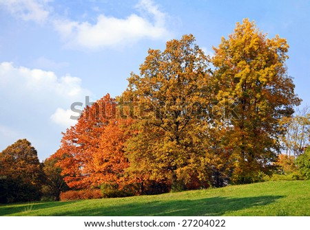 Autumn nature forest in blue sky with cloud #27204022