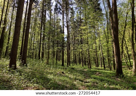 Green deciduous forest on a sunny day. #272054417