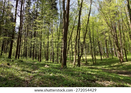 Green deciduous forest on a sunny day. #272054429