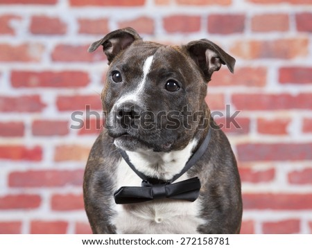 A staffordshire portrait with a black bow. #272158781