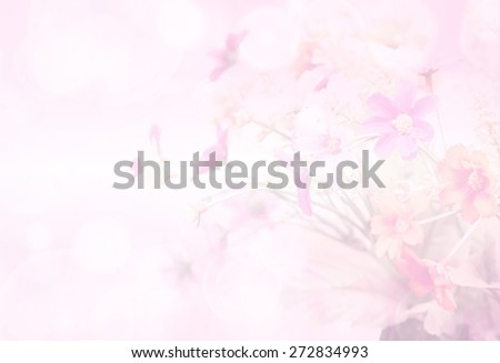 pretty flowers blooming in soft and blur style for background