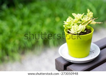 Plants in pots green on wooden table #273050948