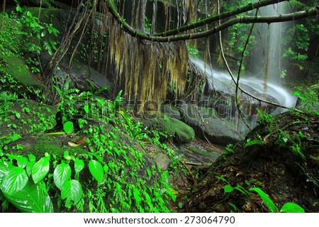 The waterfall hiden by the root of banyan tree,Phuhinrongkla National Park,Petchabun,Thailand #273064790