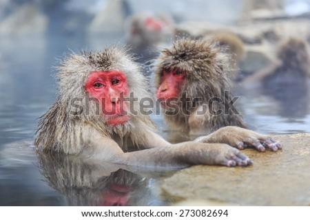 Snow monkeys in a natural onsen (hot spring), located in Jigokudani Park, Yudanaka. Nagano Japan. #273082694