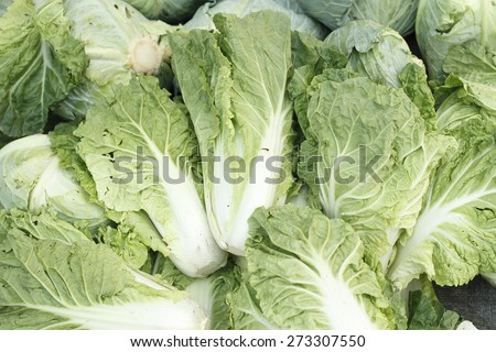 pile of fresh chinese cabbage #273307550