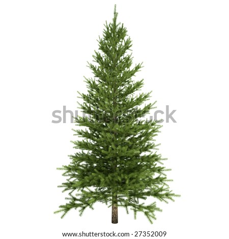 Fir tree isolated on white background #27352009