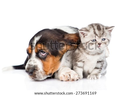 basset hound puppy lying with tiny kitten. isolated on white background #273691169