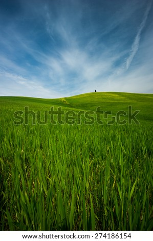 hills green wheat #274186154